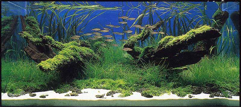 Layout Critique 2 Takehiko Honoki Aquascaping Aquatic Plant Central